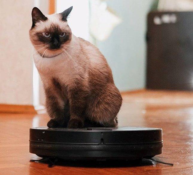 Кот на роботе-пылесосе