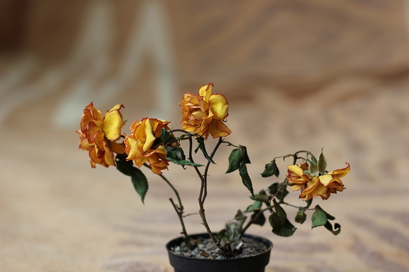 Засохшие и увядшие цветы