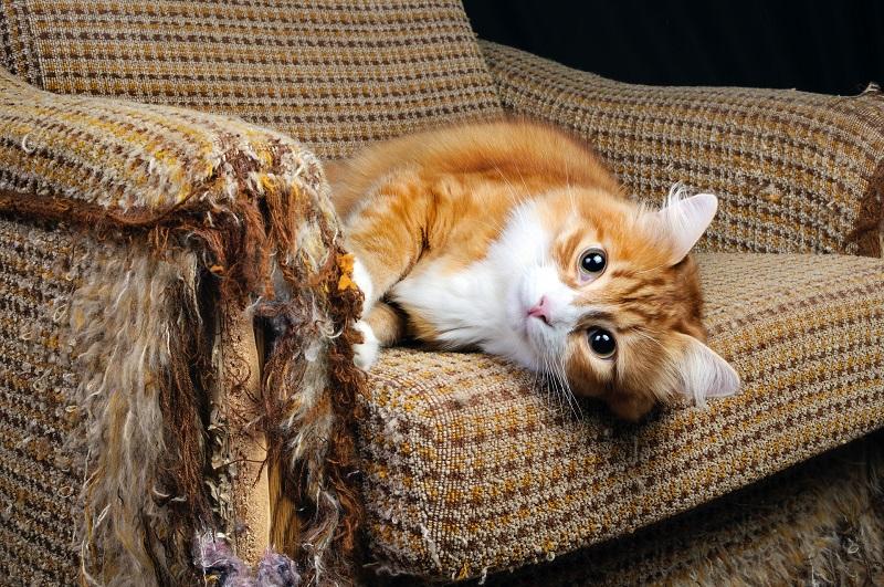Испорченная животными мебель