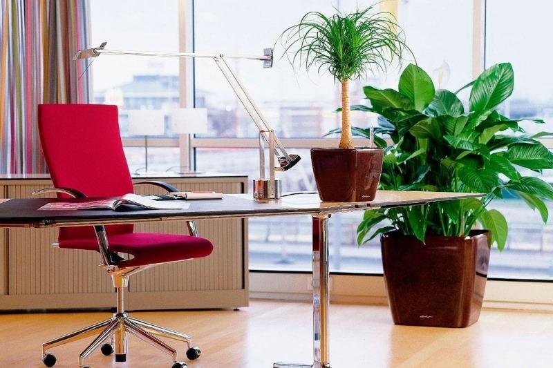 5 бюджетных идей, которые помогут сделать рабочее место более уютным